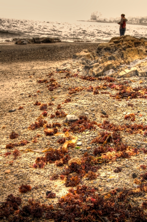 Seaweed Trail © J. Sullivan 2009